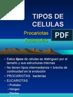 2 tipos de celulas - procariotas, eucariotas