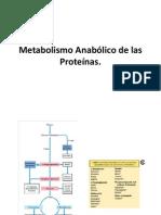 Metabolismo Anabólico de las Proteínas
