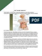 ANATOMIA Y FISIOLOGIA DEL SISTEMA  DIGESTIVO_001.docx
