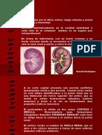 Aparato_urinario.ppt