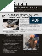 Boletin Nuestro Medio Ambiente Marino Tacna Peru 2009