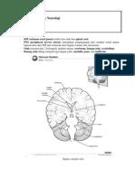 Catatan Dokter Muda Anatomy Otak