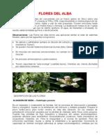 Flores Del Alb1