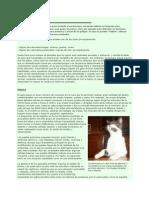 el-lenguaje-de-los-gatos.pdf