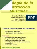 Contracción muscular - 3ero