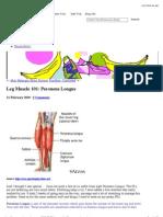 Leg Muscle 101_ Peroneus Longus « BananaRunning