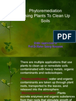 Phytoremediation Using Plants to Clean Up Soils
