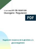 metabglucogeno gluconog