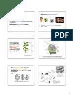 Starch-06-6slide.pdf