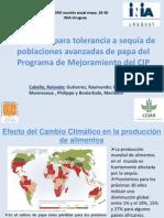 Evaluación para tolerancia a sequía de   poblaciones avanzadas de papa del   Programa de Mejoramiento del CIP