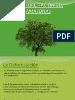la deforestacin del amazonas
