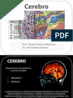 Telencefalo Cerebro Bbc2