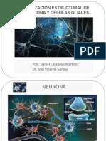 Neuro Glia Electrofisio Sina Ptica2013 Act Red