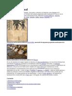 050411plantasmedicinaleswikipediawww Gftaognosticaespiritual Org 121221080756 Phpapp02