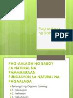 Pag-Aalaga Ng Baboy