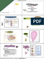 Histologi Reproduksi