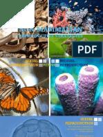 Non-Mammalian Reproductive Strategies