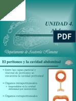 30 ABD (266 a 278) Visceras Abdominales Esofago Estomago Intestino Delgado