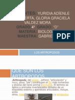 artropodos biologia 4ºD