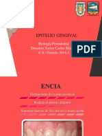 Epitelio Gingival