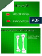 OSTEOLOGIA - 2