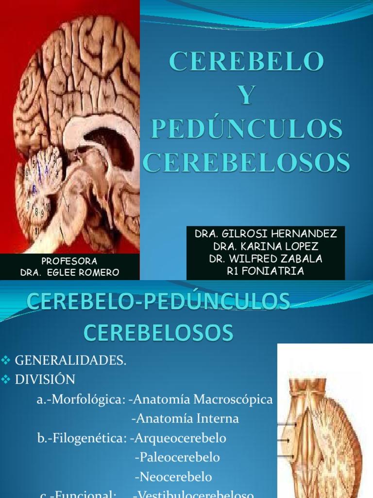 Hermosa Dr Najeeb Conferencias Anatomía Macroscópica Embellecimiento ...