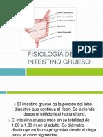 Anatomia y Fisiologia Del Intestino Grueso