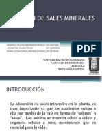 ABSORCIÓN DE SALES MINERALES