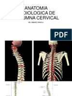Anatomia Radiologica de Columna Cervical