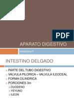 APARATO DIGESTIVO DUODENO