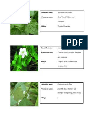 Common Weeds In Oil Palm Plantation Plants Organisms