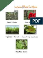 Protective Structures of Plantsdowhdioehwiodhewio ueoudw