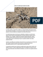 Araña Dorada del Desierto