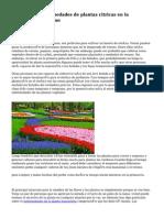 Jardineria y enfermedades de plantas citricas en la temporada de verano