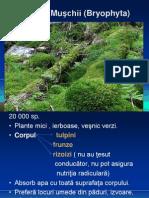 0_muschii_ferigile