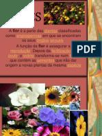 Flor Nona Aula