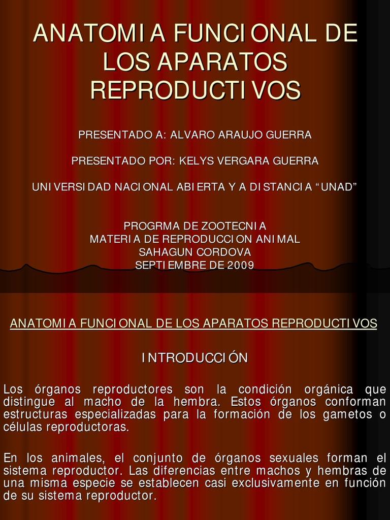 Famoso Ovejas Anatomía Reproductora Composición - Imágenes de ...