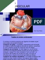 sistema-circulatrio-1195837796876768-2