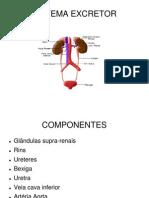 sistemaexcretor-100530201323-phpapp01