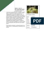 Classificação biologica - amazonia selvagem