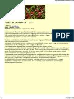 Pistacia lentiscus,lentisco