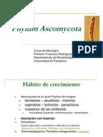 Phylum Ascomycota-3 (1)