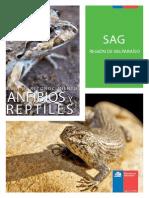 Anfibios y Reptiles SAG Valparaiso