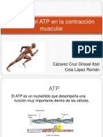 Función del ATP en la contracción muscular exposicion.pptx