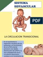 Sistema Cardiovascular y Respiratorio Del Rn