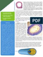 ARTERIAS Y VENAS.pdf