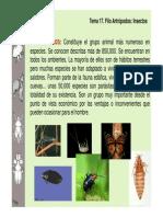 Clasificacion insectos-zoologia