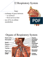 22 Respiratory System