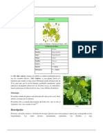 Vitis Vinifera.pdf 5