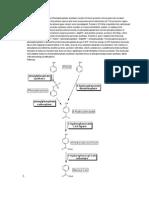 Phenol Degrading Enzymes